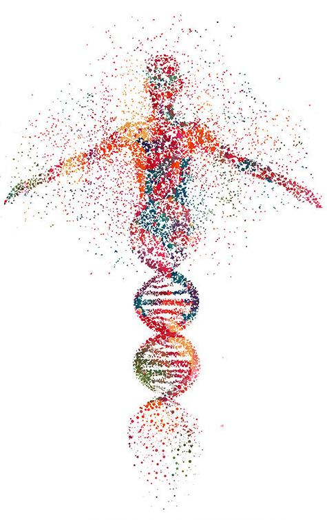DNK test struktura